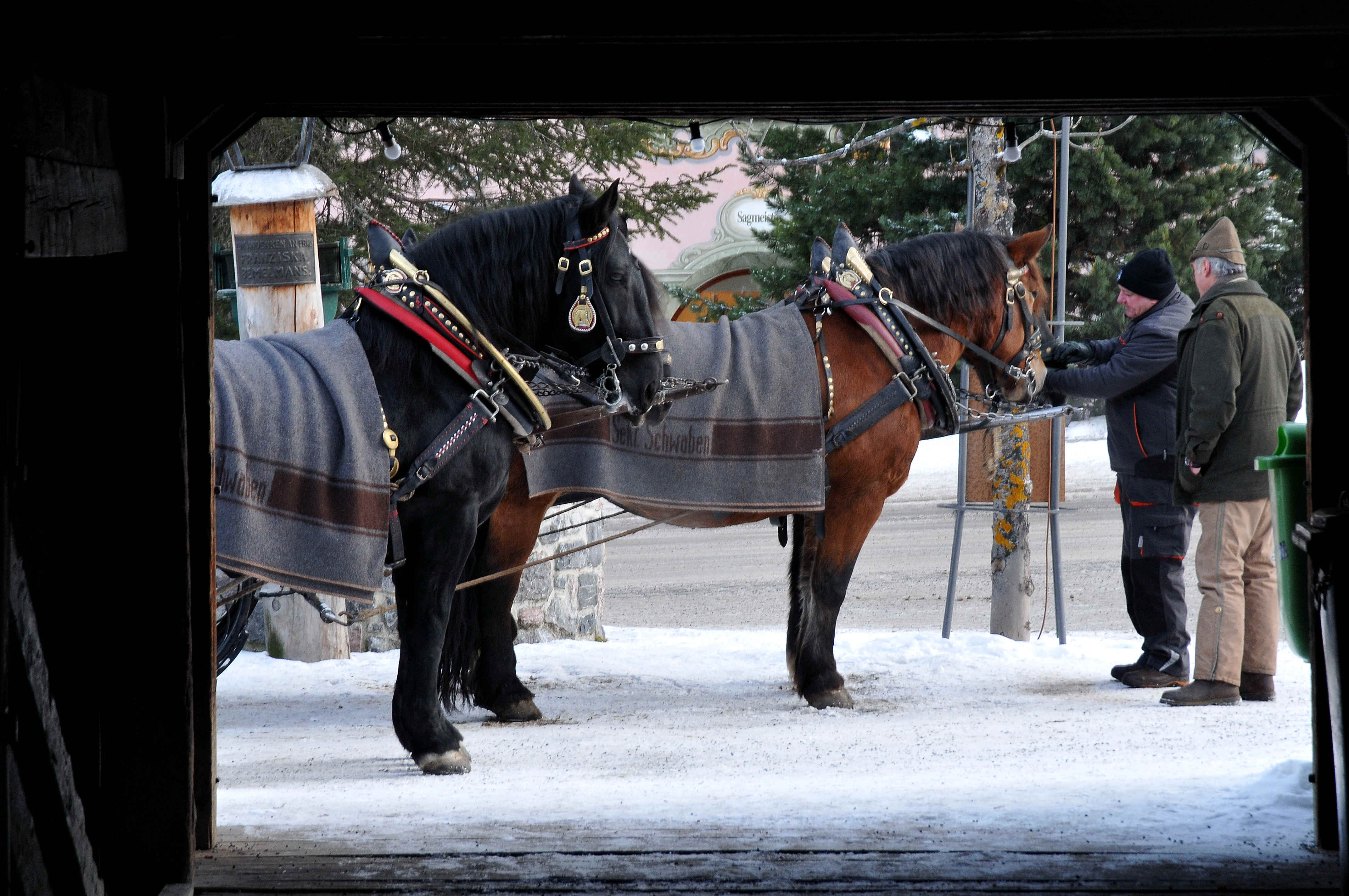 Family ski holidays in Lech - horsedrawn sleigh